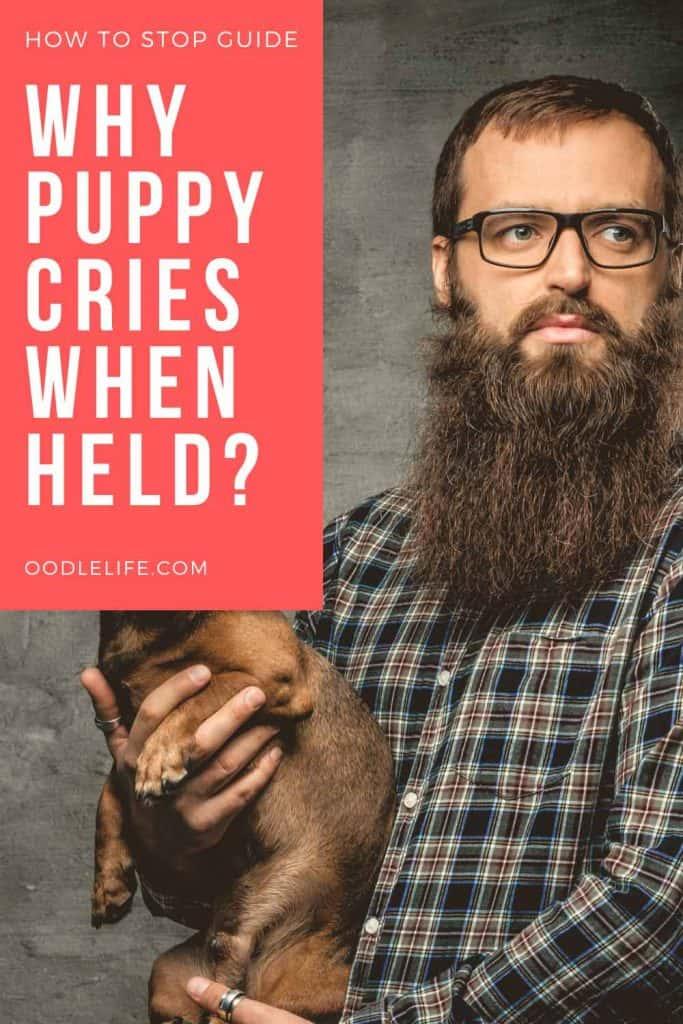 puppy cries when held