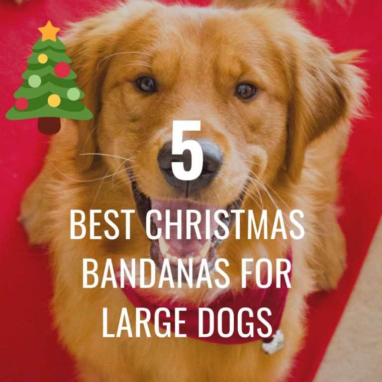 Best Christmas Bandanas for Large Dogs