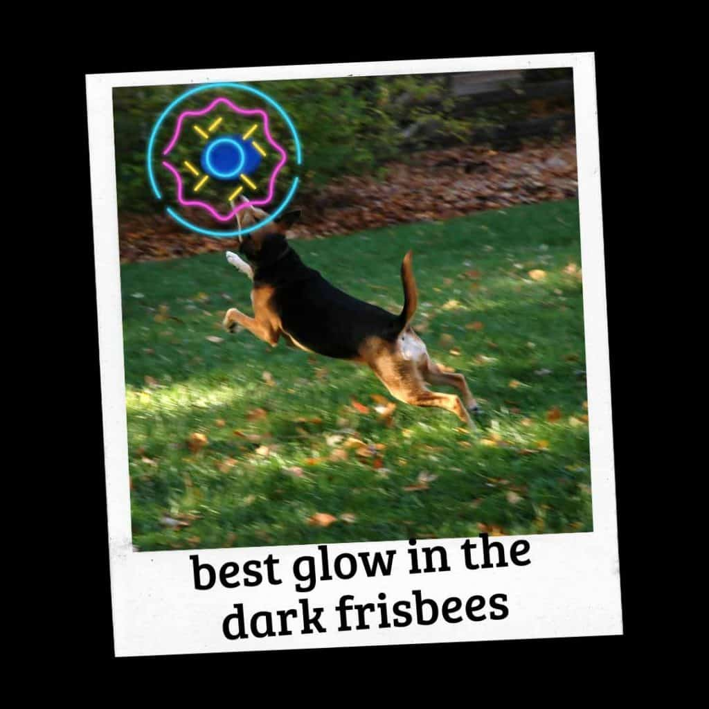 Top 4 Glow in the Dark Frisbee for Dogs (Reviews) 1