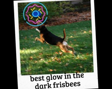 Top 4 Glow in the Dark Frisbee for Dogs (Reviews) 20