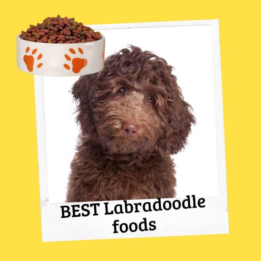 best labradoodle foods