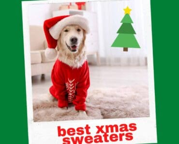 best large dog xmas sweaters