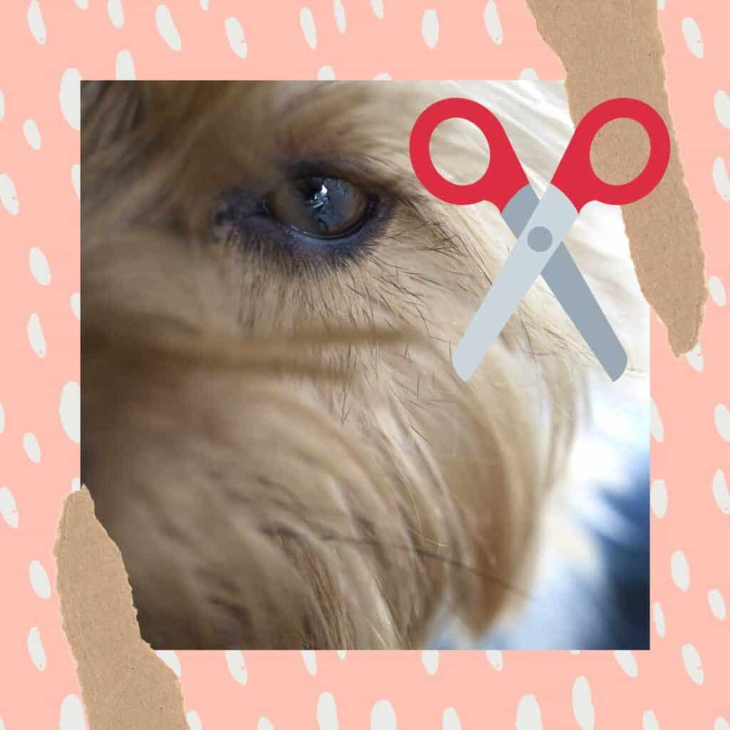can you cut dogs eyelashes