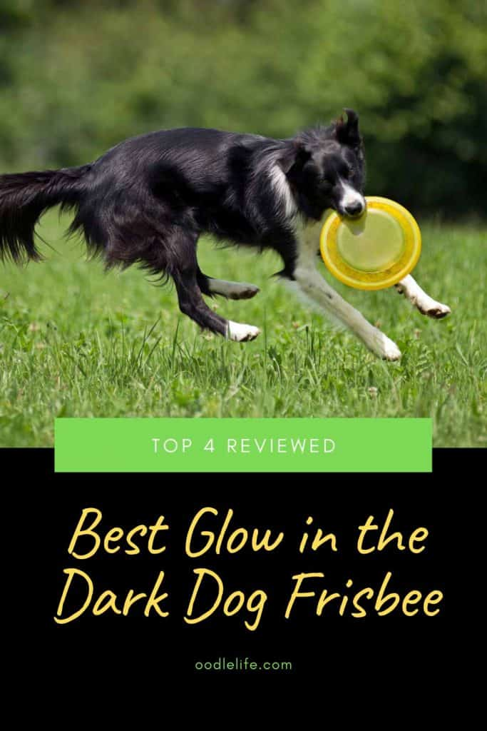 glow in the dark frisbee for dogs