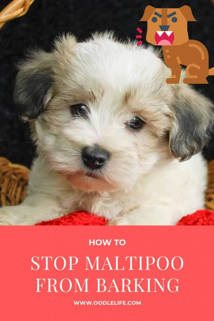 how to stop a maltipoo from barking