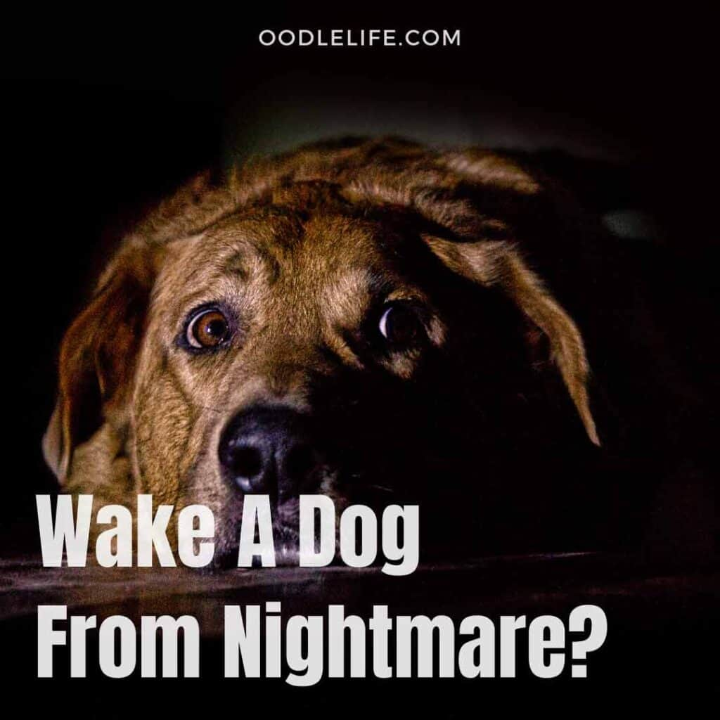 how to wake a dog from a nightmare