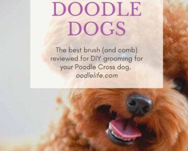 best dog brush for doodle dog