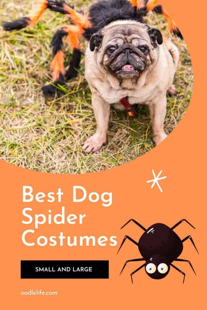 best dog spider costume