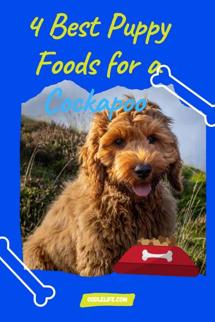 best puppy foods for cockapoo