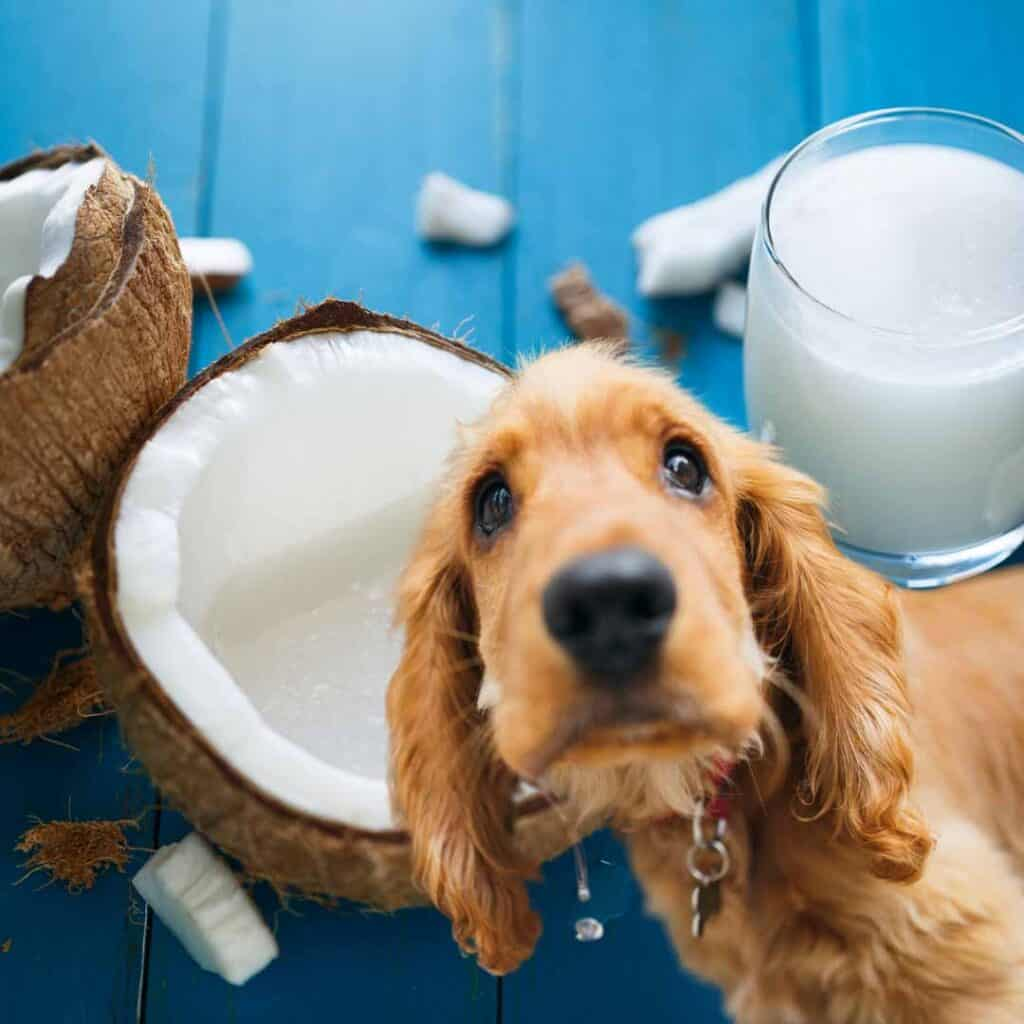 Can dogs have coconut?