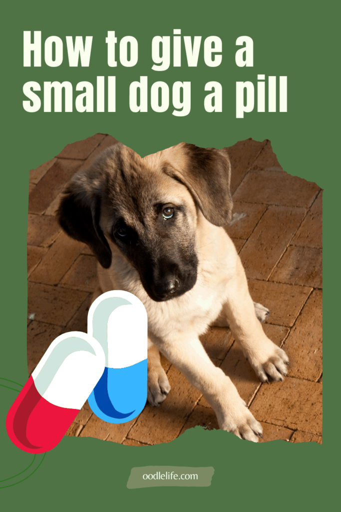 how to give a small dog a pill