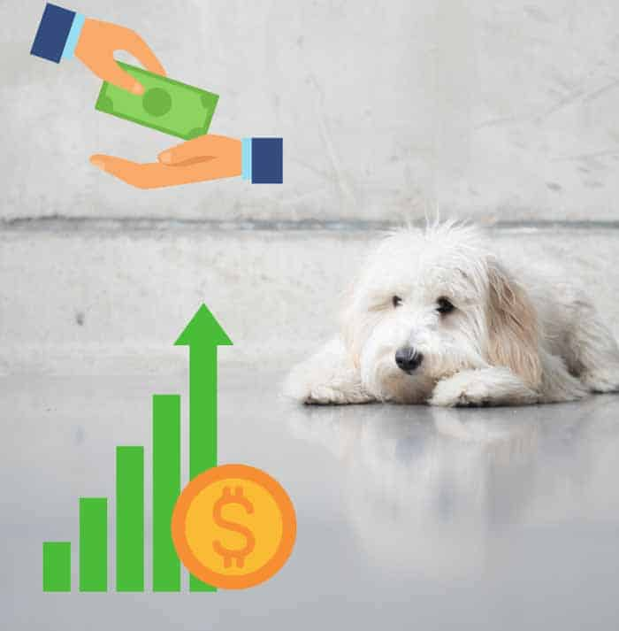 how much do goldendoodles cost per year