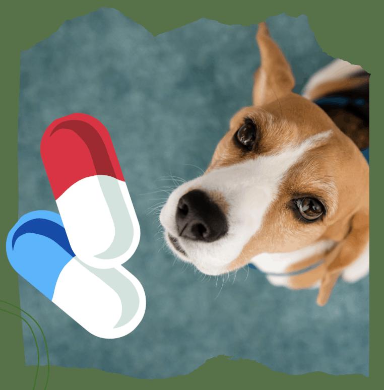 small dog taking pill