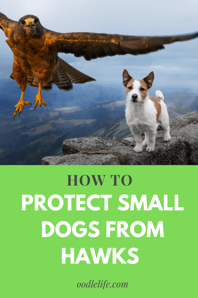 how to protect small dogs from hawks