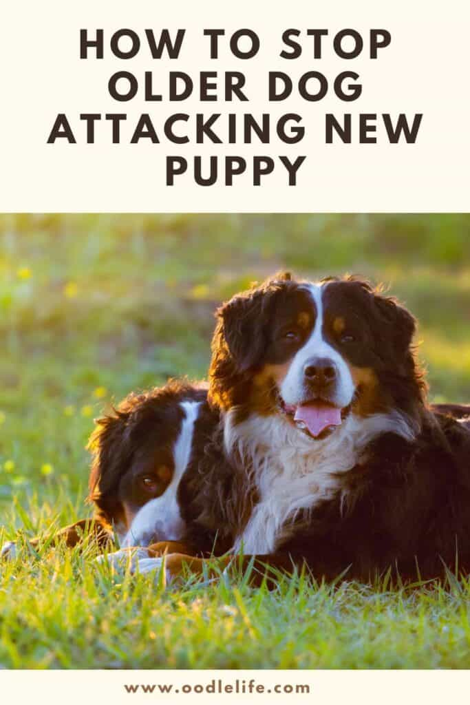 how to stop older dog attacking new puppy