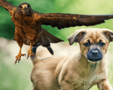 How To Protect Small Dogs From Hawks [and Owls] 5