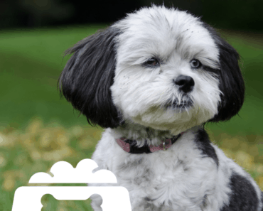 shih poo dog food