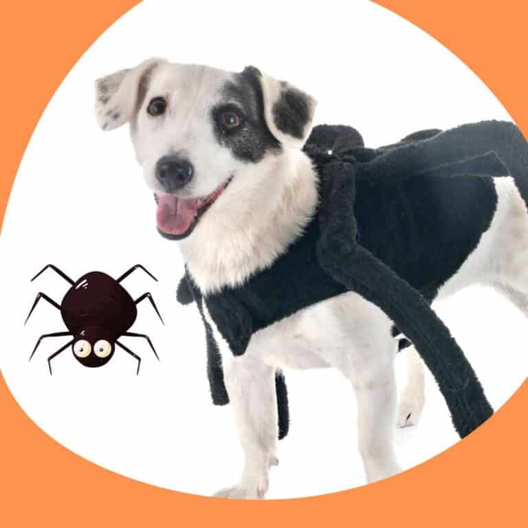 4 Best Dog Spider Costume Reviews (Small Dogs and Large)