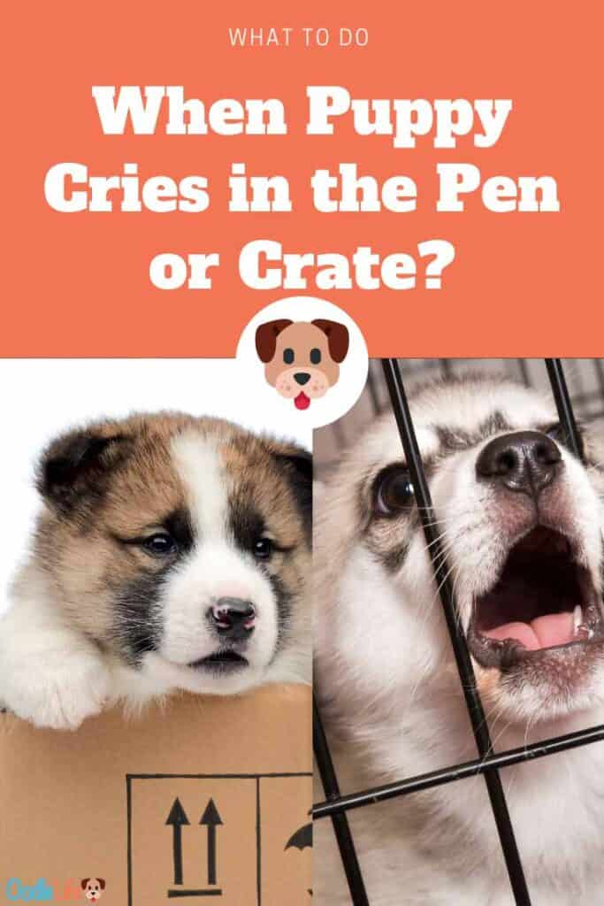 what to do when puppy cries in the pen
