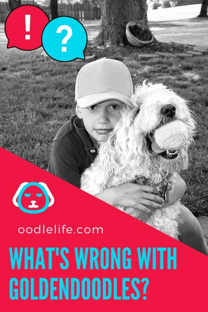 what's wrong with goldendoodles
