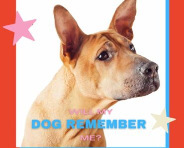 how long does a dog remember