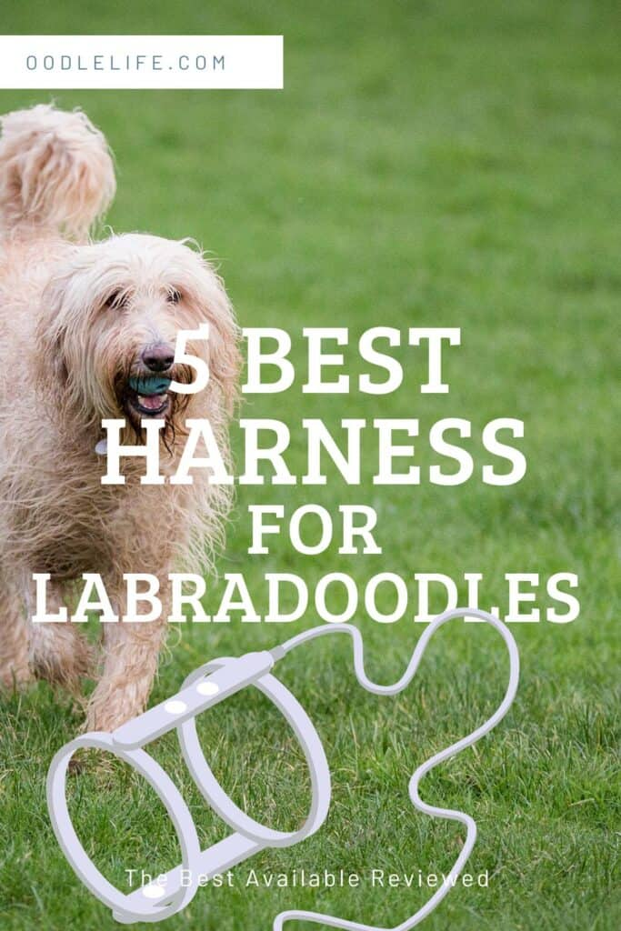 best harnesses for labradoodles