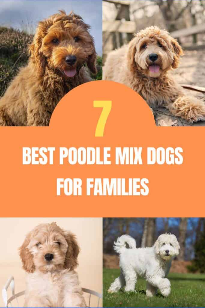 best poodle mix dogs for families
