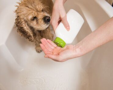 Best Dog Shampoo for Dry Skin