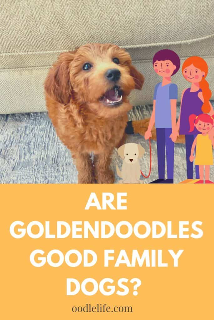 are goldendoodles good family dogs
