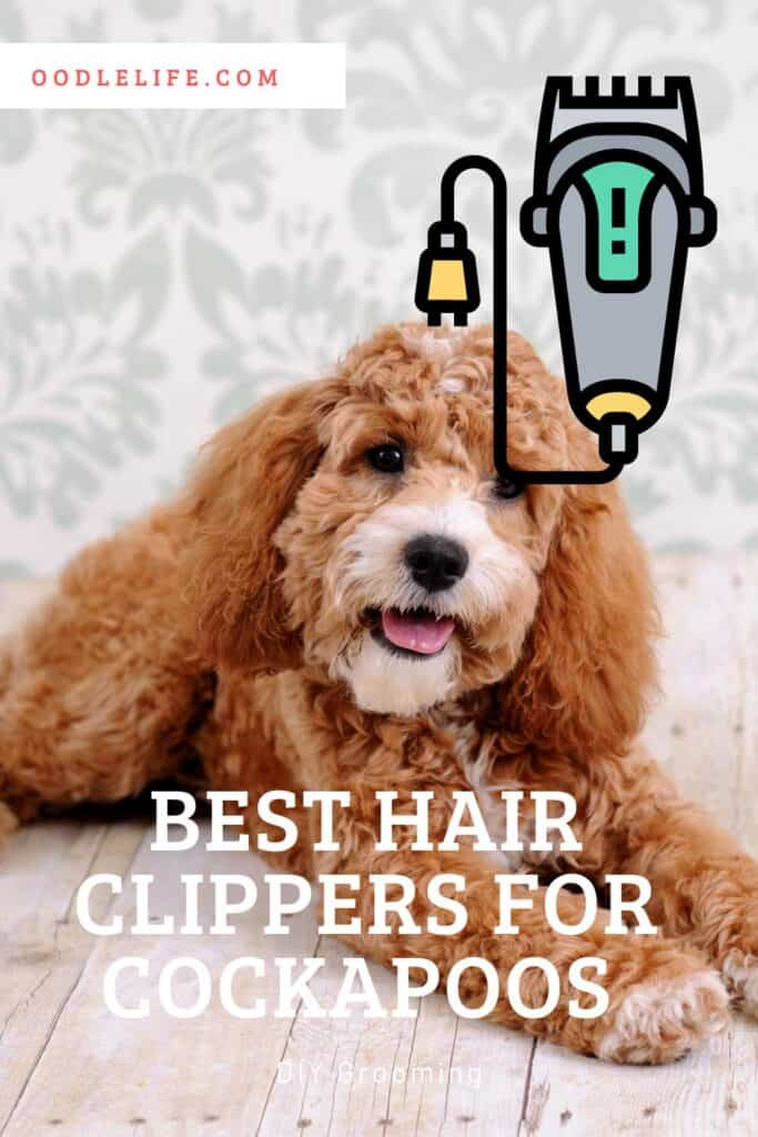 best clippers for cockapoo dogs
