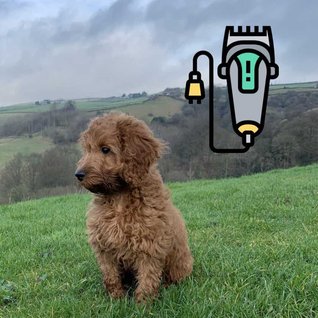 4 Best Dog Clippers For Cockapoo Dogs 1