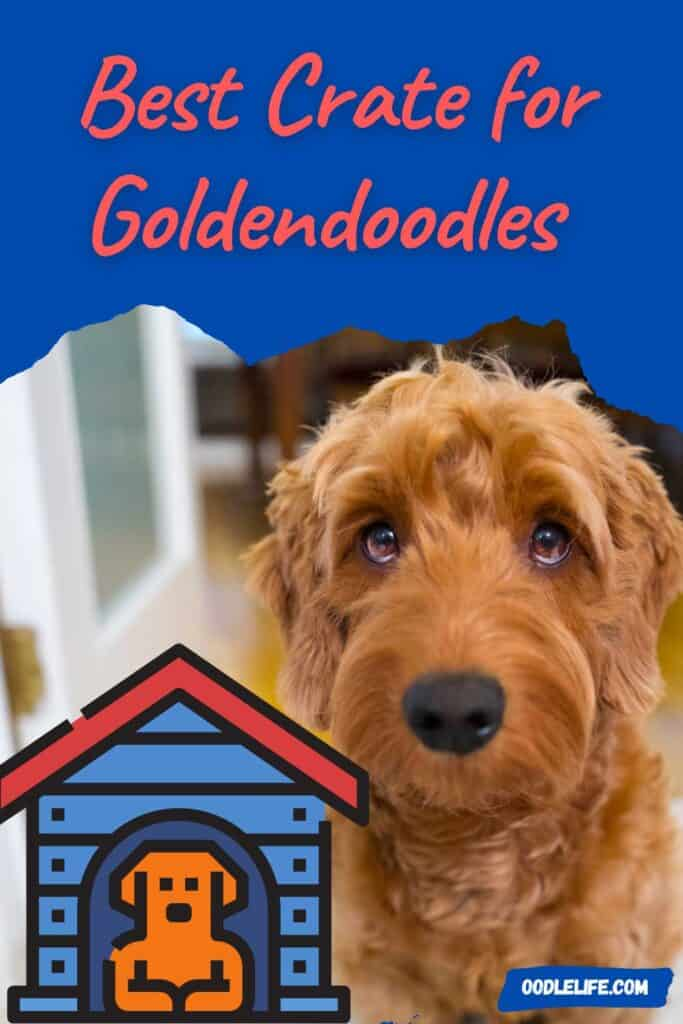 best crate for goldendoodles