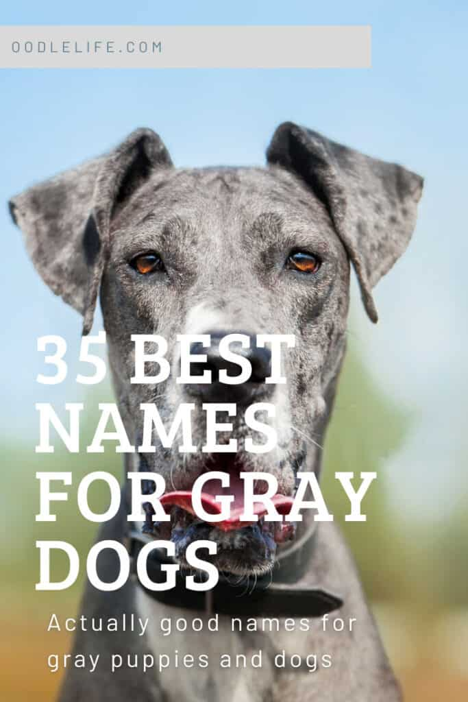best gray dog names