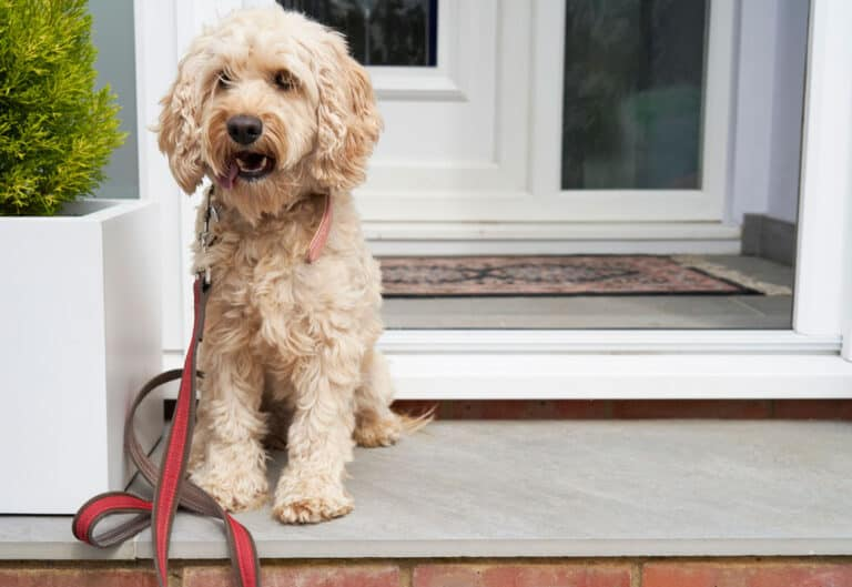 21 Best Gifts for Cockapoo Parents [Cockapoo Lovers Gift Guide]