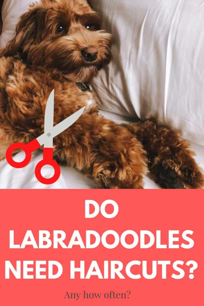do labradoodles need haircuts