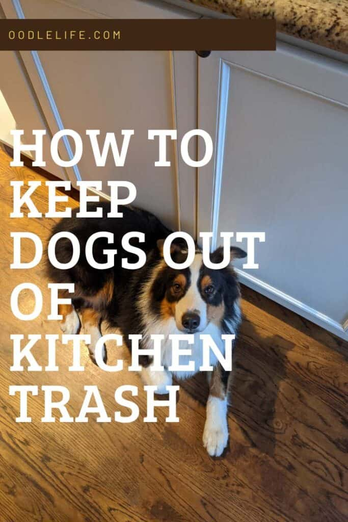 best dog proof kitchen trashcan