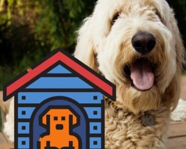 5 Best Dog Crates for a Goldendoodle (Reviews) 4