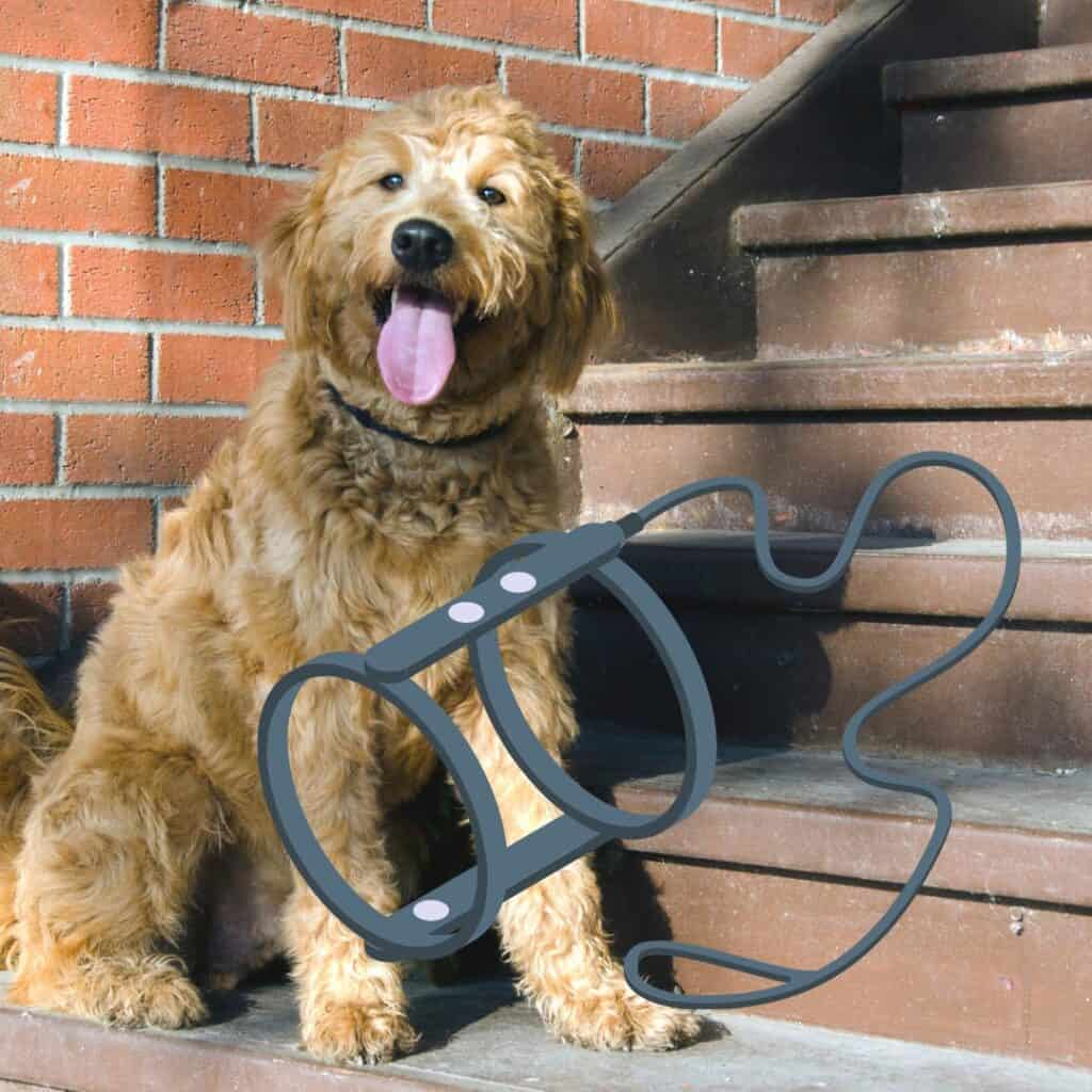 6 Best Dog Harness for Goldendoodles (Our Favorites) 1