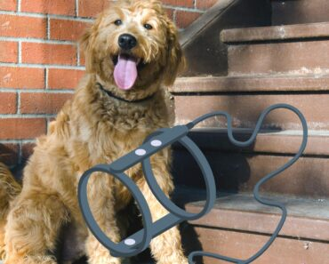 6 Best Dog Harness for Goldendoodles (Our Favorites) 2
