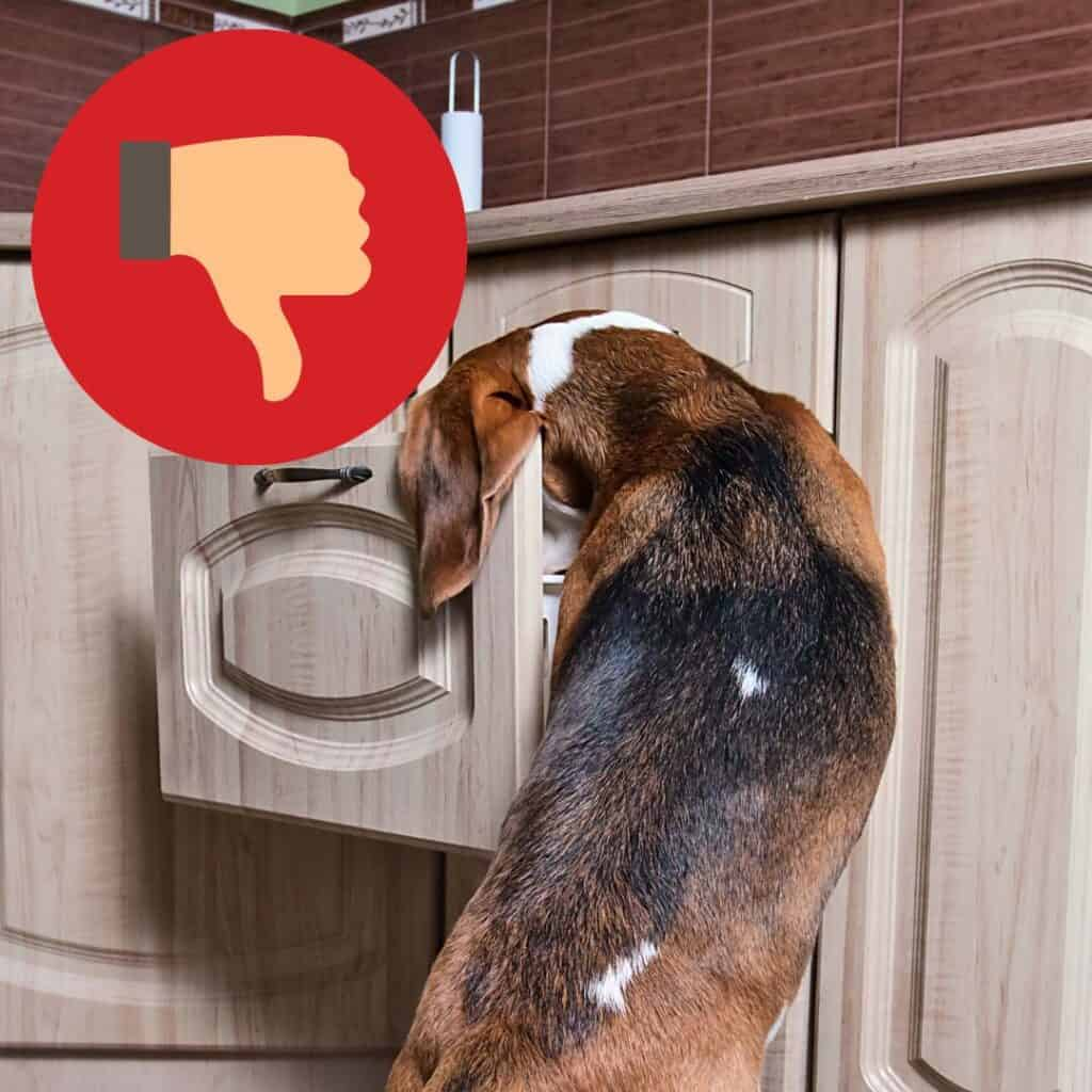My Dog Ate a Condom - What to do? 2