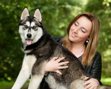 5 Best Dog Food For Huskies 6