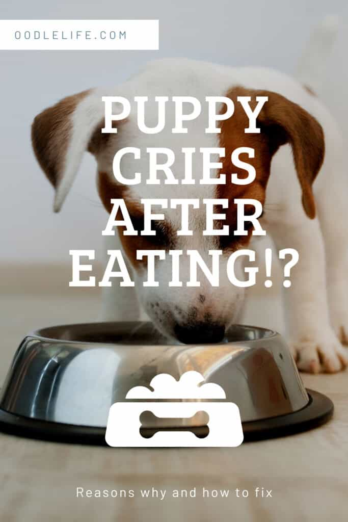 dog crying after eating causes