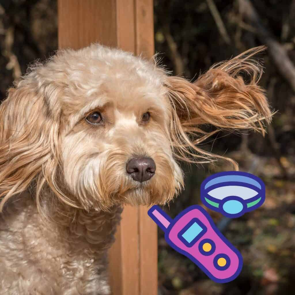 best remote collar for a goldendoodle