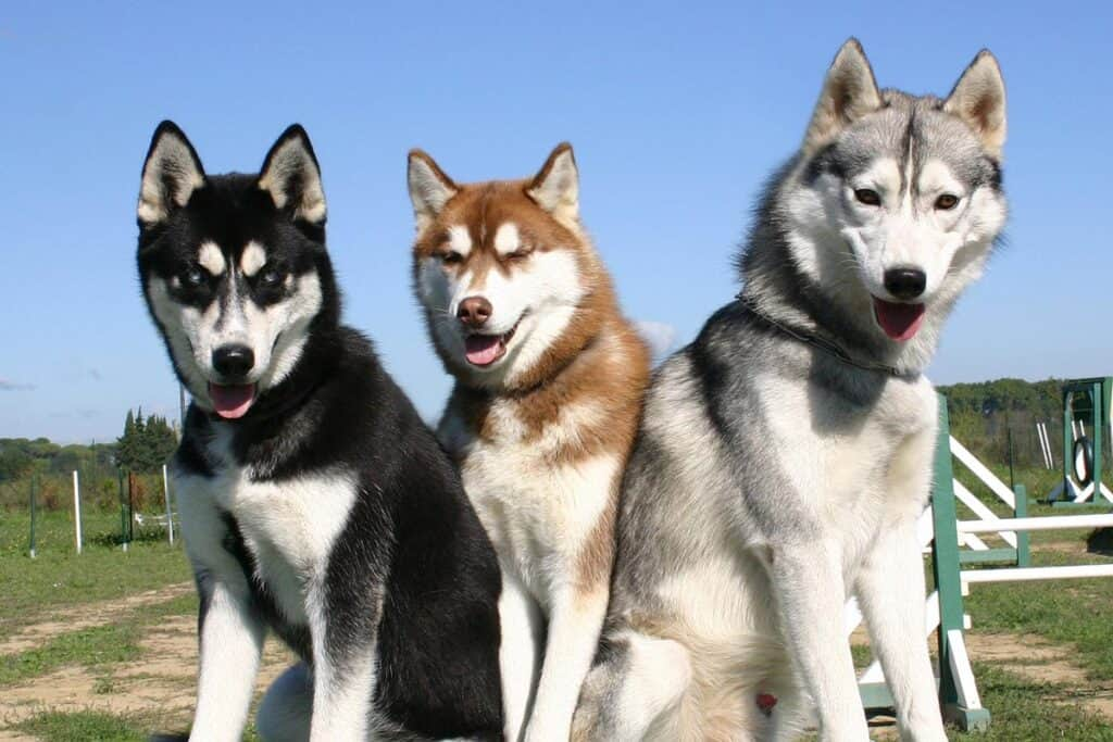 5 Best Dog Food For Huskies 2