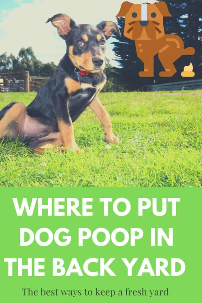 where to put dog poop in the back yard