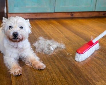 Best Broom for Dog Hair