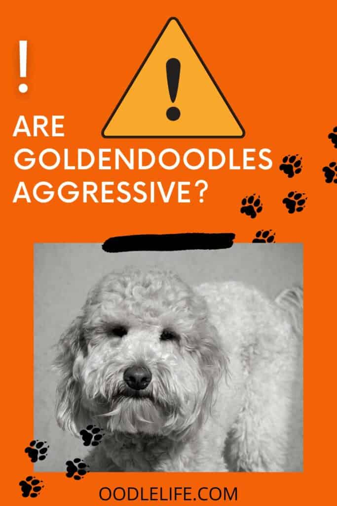 are goldendoodles aggressive