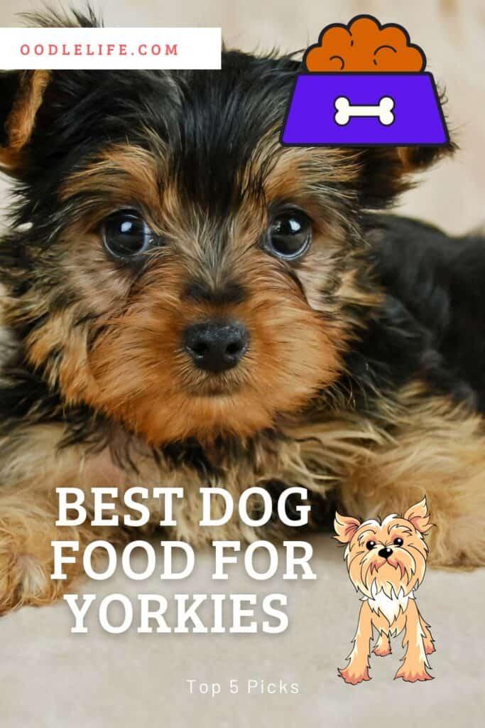 Best Food For Yorkies (5 Best Picks for Healthy Yorkshire Terriers) 2