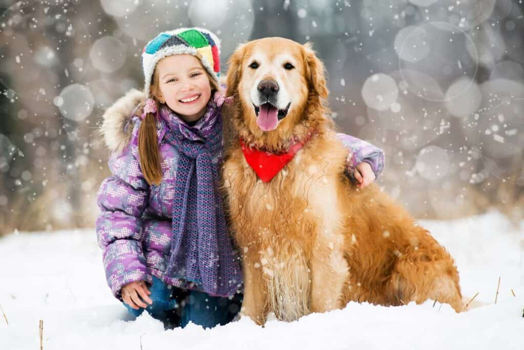 golden retriever in the snow with girl