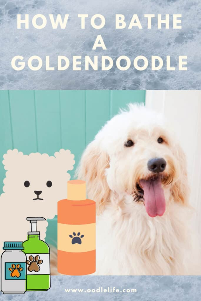 how to bathe a goldendoodle
